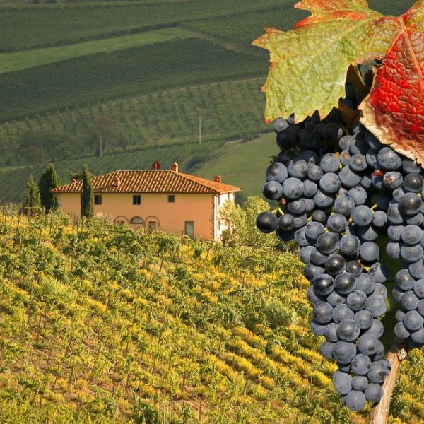 Barbaresco wineries tour
