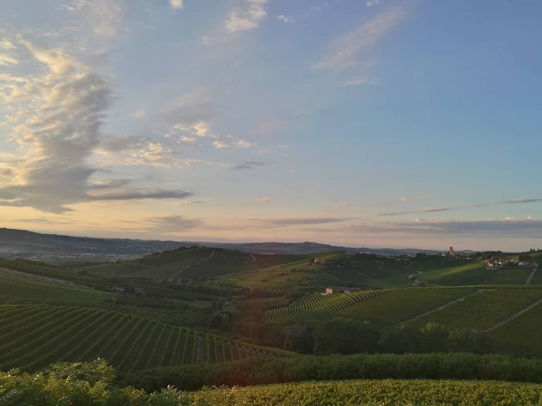 Barbaresco landscape