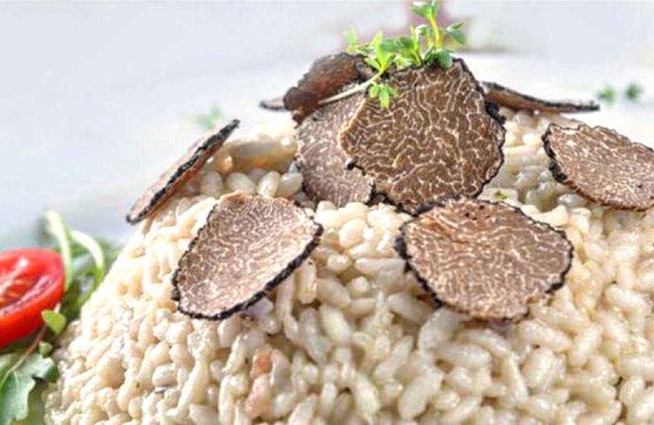 Best restaurants in langhe truffle