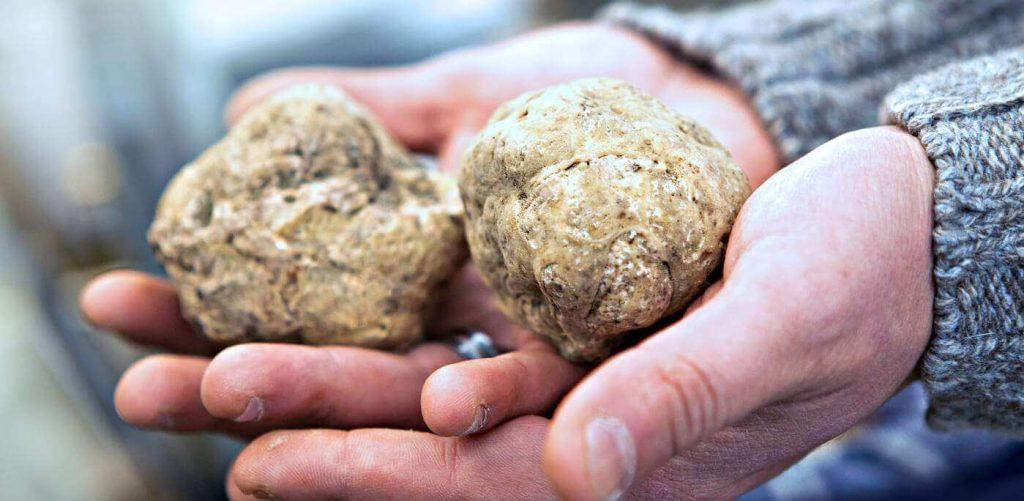 truffles hunting in Langhe