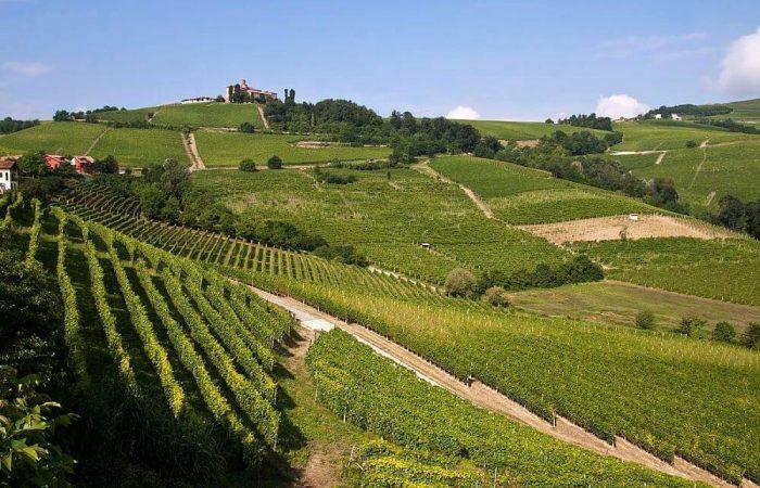 Discover best Piedmont Langhe food - Wine Tour