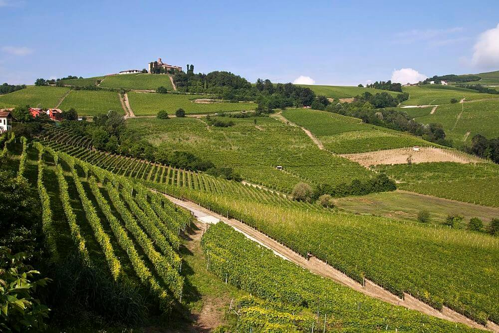 Discover best Piedmont Langhe food - Wine Tour